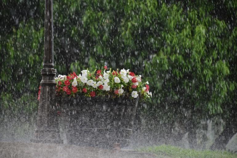 vihm.jpg